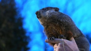 At 7:25 a.m. this morning, amidst mostly cloudy skies, and temperatures in the low 30s, Groundhog Phil saw his shadow in the little town of Punxsutawney, Pa.